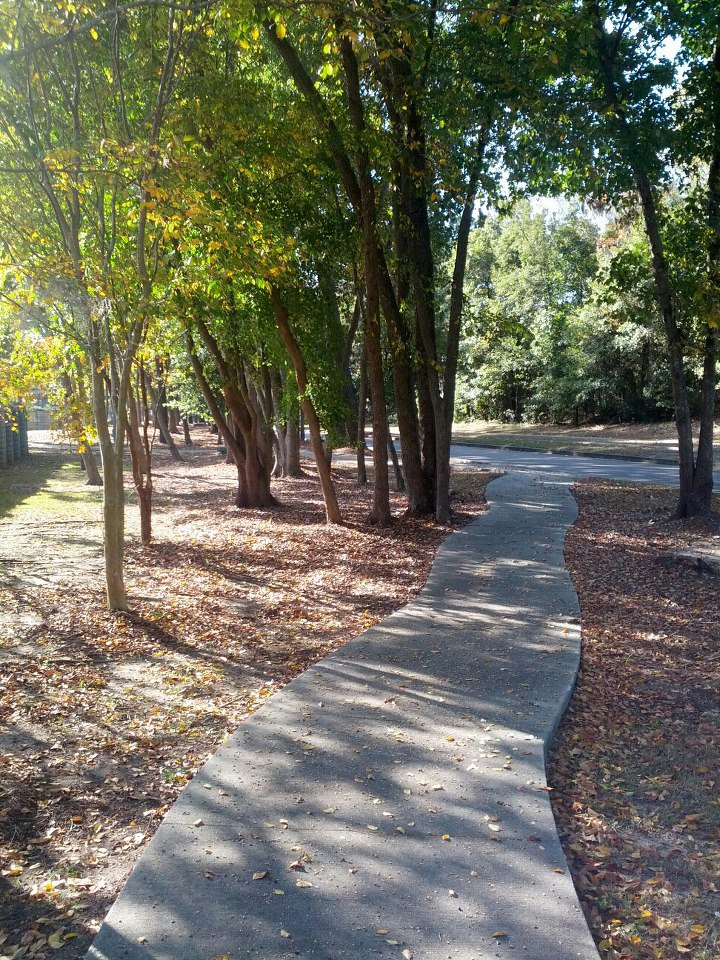 crunchy_leaves_path.jpg