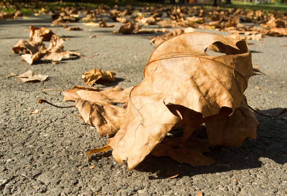 Crunchy leaves are our trading opportunities.